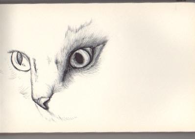 Cat WIP
